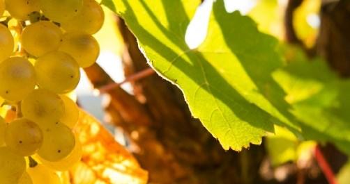 Autumn in 5 Terre