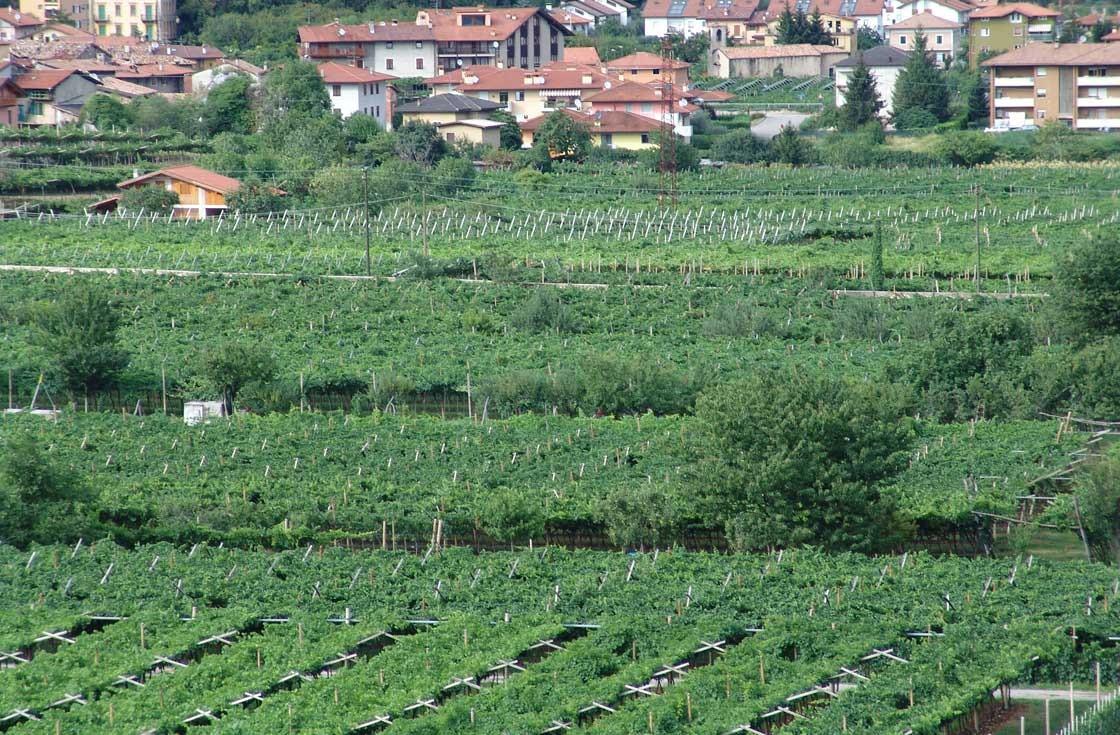 Azienda Agricola Tonelli