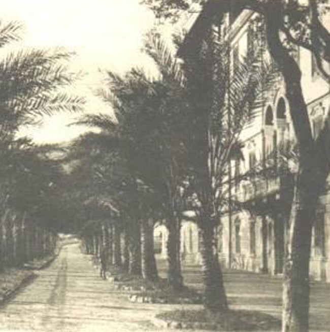 Historical photo of the avenue of palm trees in front of the Grand Hotel Arenzano