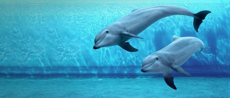 i delfini Acquario Genova