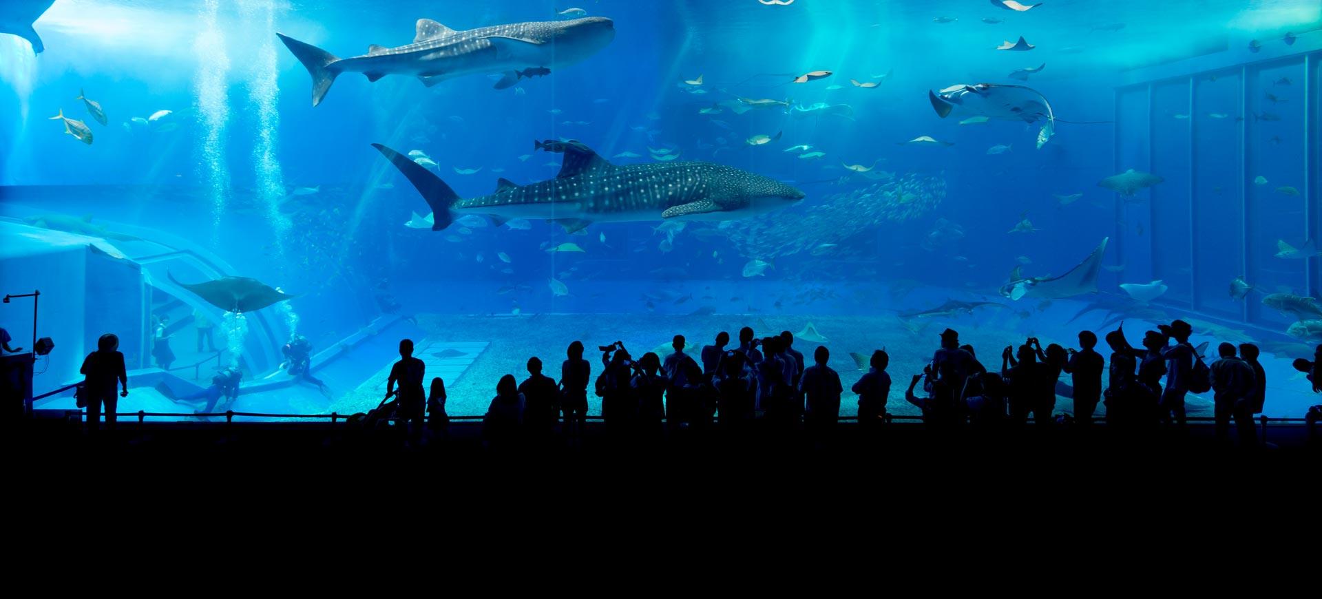 Aquarium von Genua